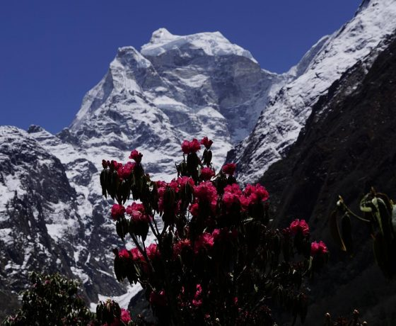 everest_base_camp_trekking_6_20151017_1197731167-560x460 SZCZYTY W NEPALU